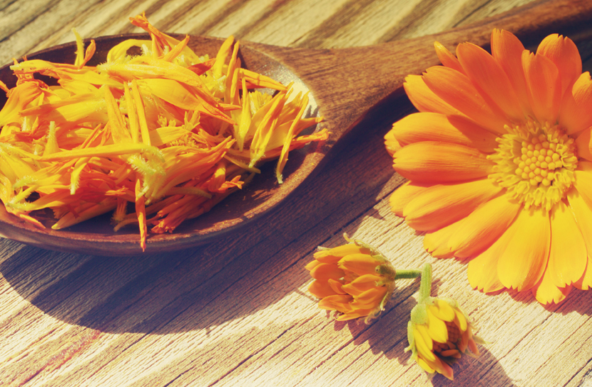 Delight In Giving: Calendula