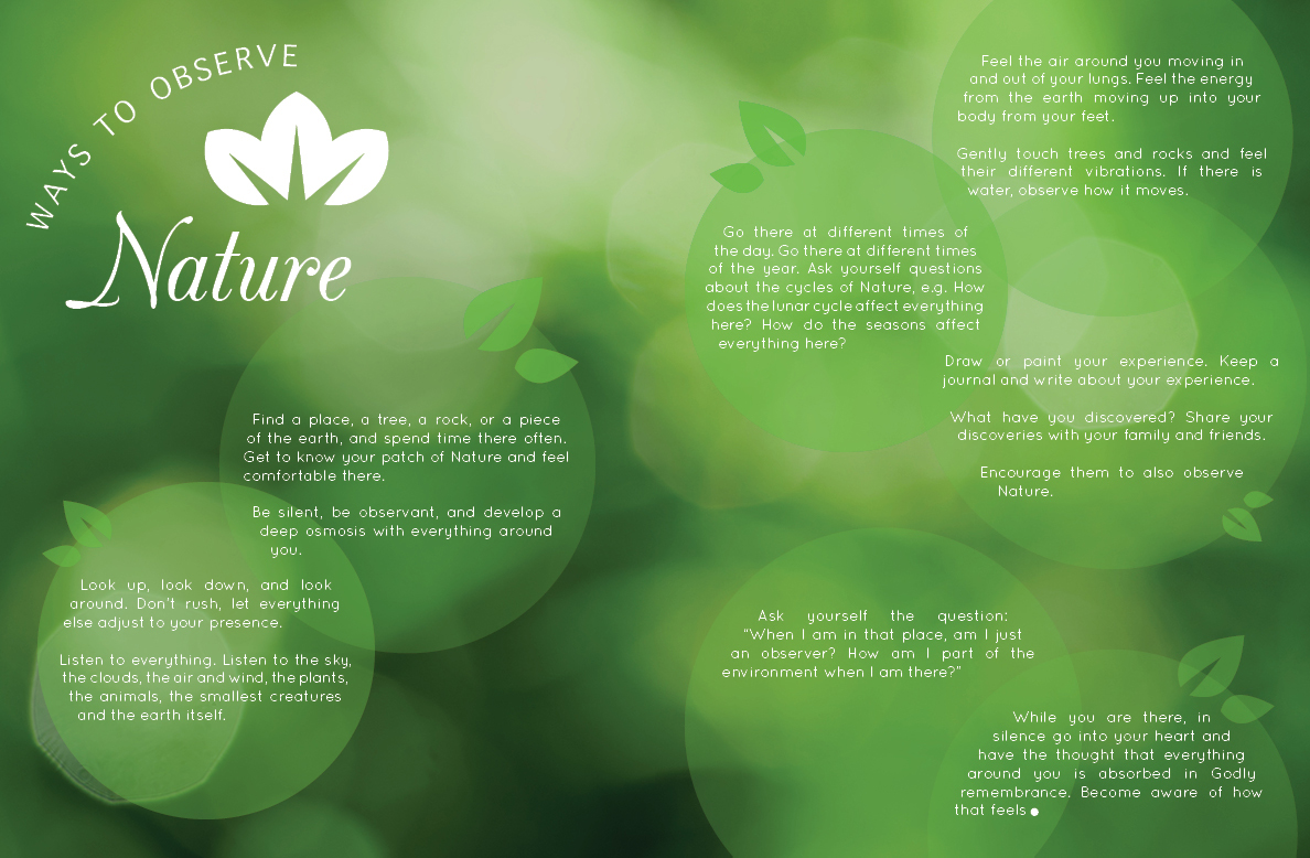 Ways to Observe Nature