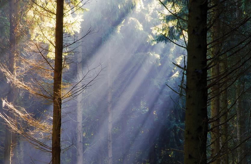 heartfulness-mindfulness