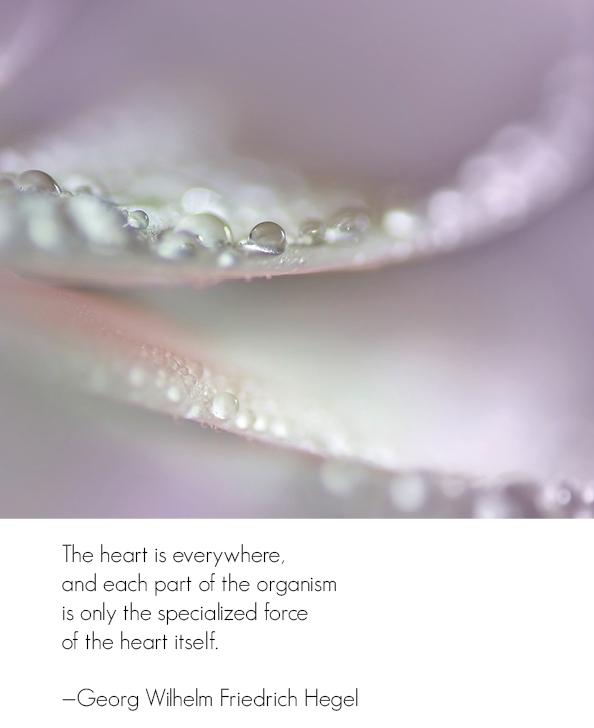 the-heart