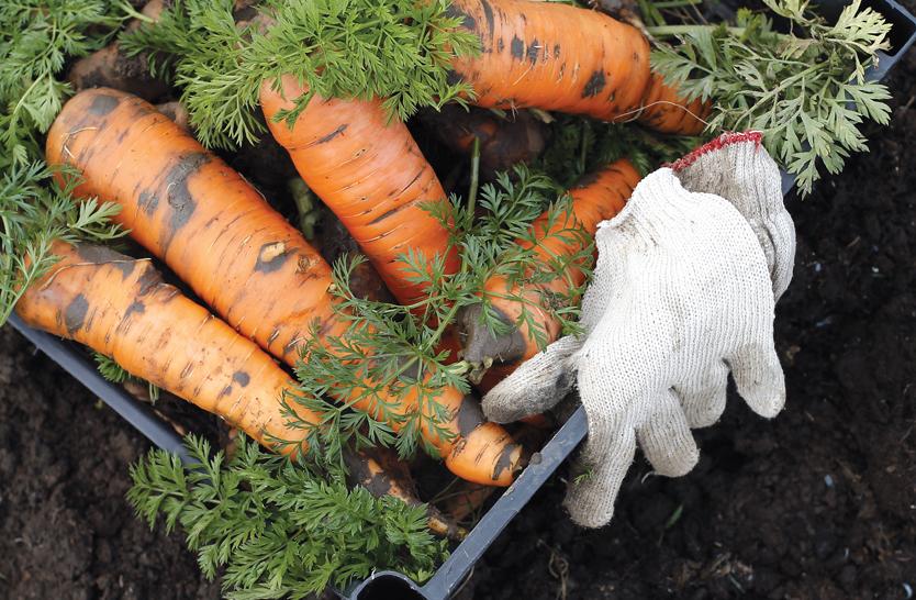 garden-gloves
