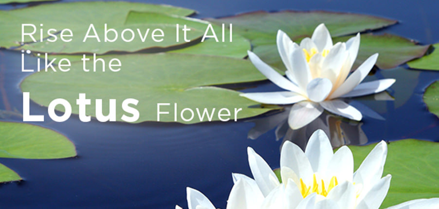 Rise Above It All Like The Lotus Flower Spiritual Direction
