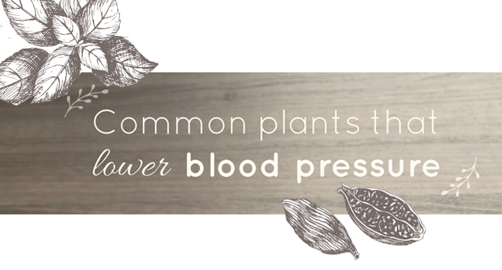 Common plants that lower blood pressure