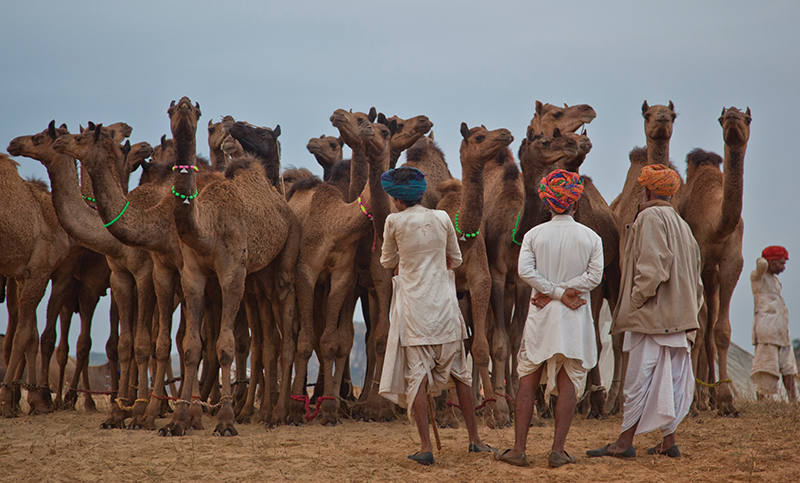 Pushkar – a photo essay