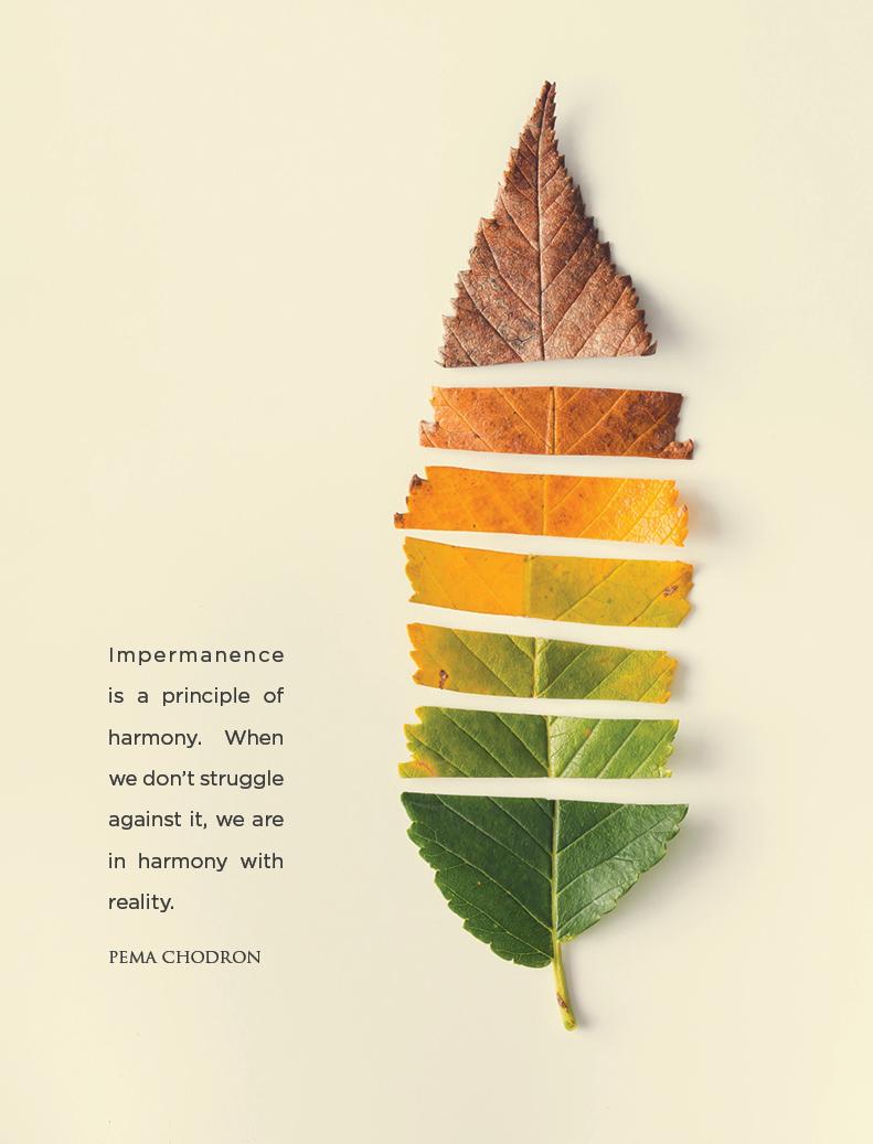 Meditation on Impermanence | Reimagine