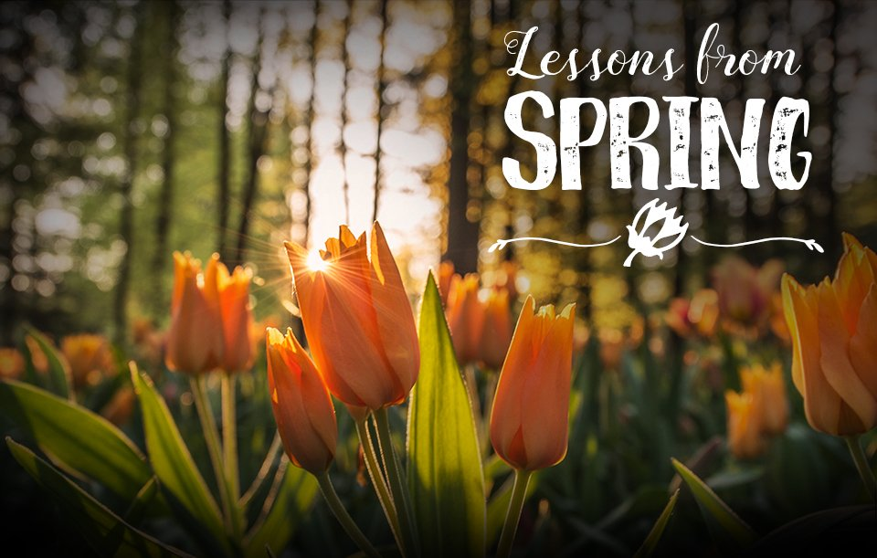 Lessons from spring