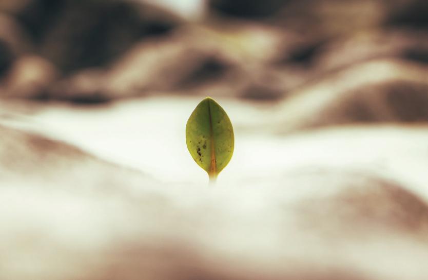 Choosing life – part 2